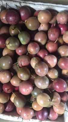 广西来宾紫红色百香果 60 - 70克