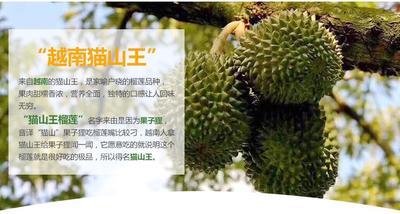 广西壮族自治区崇左市凭祥市猫山王榴莲 80 - 90%以上 2 - 3龙8国际官网官方网站