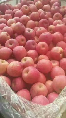 这是一张关于红富士苹果 80 - 85mm 条红 纸袋的产品图片