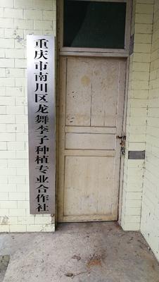 重庆脆红李 20 - 25mm