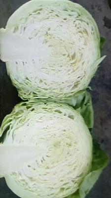 山西省晋中市寿阳县铁头圆包菜 1.0~1.5斤