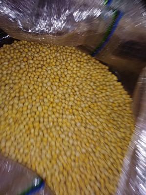 湖北武汉黄黄豆 生大豆 编织袋包装 1等品