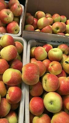 这是一张关于美八苹果 75 - 80mm 条红 膜袋的产品图片