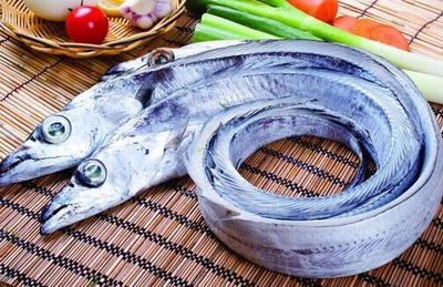 湖北恩施土带鱼 人工殖养 1-1.5公斤