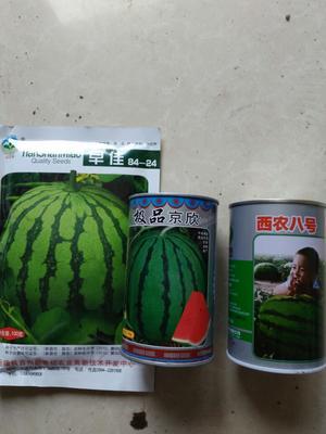 江苏泰州兴化市京欣西瓜 6斤打底 8成熟 1茬 有籽