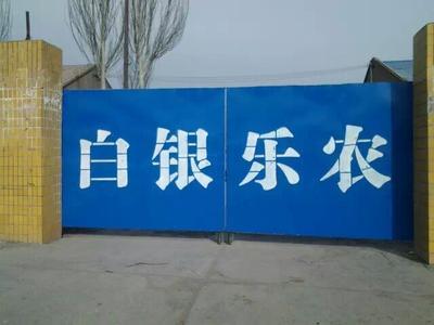 甘肃白银张杂谷13号 晚稻