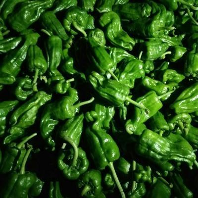 这是一张关于薄皮椒 10~15cm 微辣的产品图片