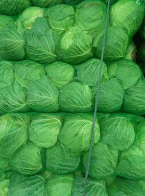 这是一张关于绿甘蓝 4~5斤的产品图片