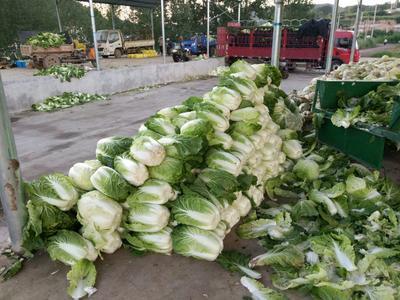 山西晋中黄心大白菜 3~6斤