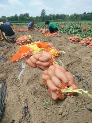 这是一张关于龙薯九号 混装统货 红皮的产品图片