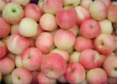 这是一张关于美八苹果 75mm以上 片红 膜袋的产品图片