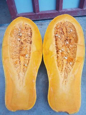 四川达州蜜本南瓜 6~10斤 长条形