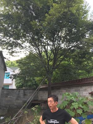 浙江省湖州市长兴县红榉