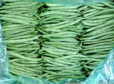 上海青浦区小刀豆 10-15cm