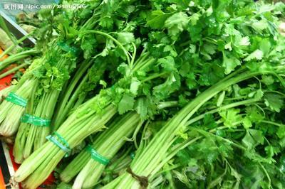 山东省聊城市东昌府区皇妃芹菜 45~50cm 大棚种植 0.5斤以下