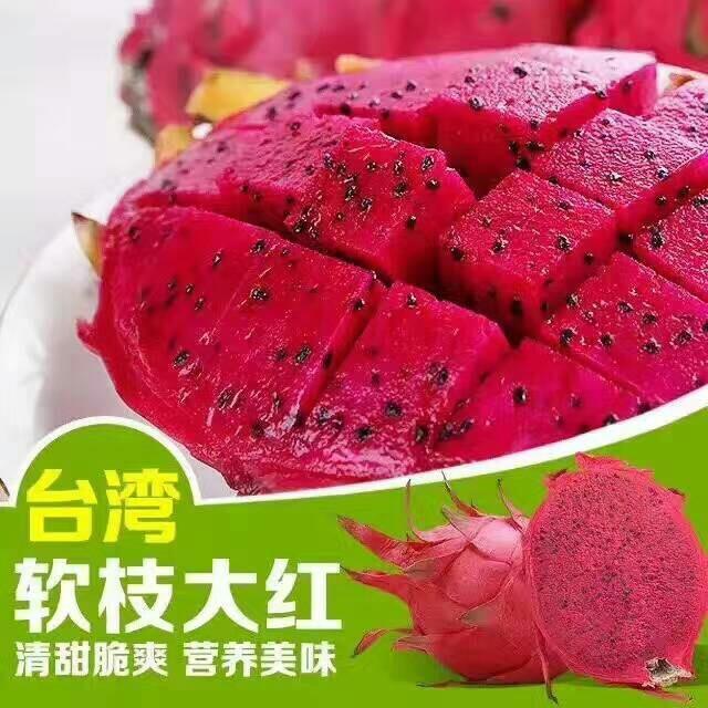 台湾软枝大红火龙果苗
