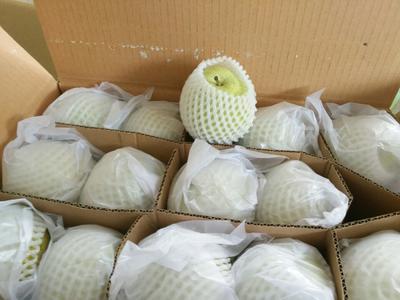 这是一张关于雪花梨 450-500g 90mm以上的产品图片