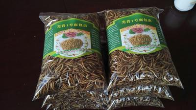山西忻州黄粉虫 可食用黄粉虫干