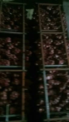 河南开封二红洋葱 6~8cm 4两以上 红皮