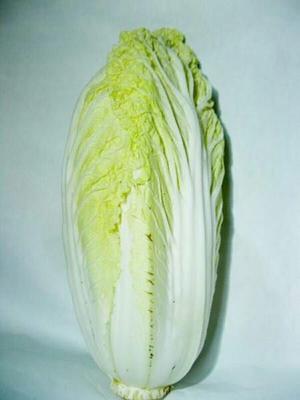 湖北宜昌黄心大白菜 3~6斤 净菜