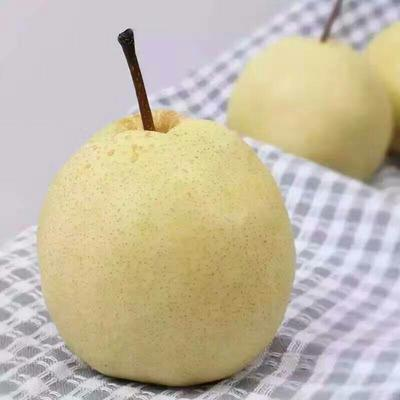 这是一张关于酥梨 200-250g 80mm以上 净重10斤包邮一件代发的产品图片