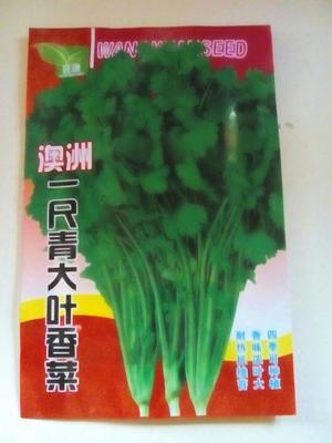 内蒙古赤峰元宝山区香菜种子 种子