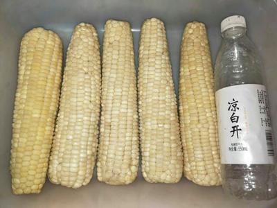 河北沧州速冻糯玉米