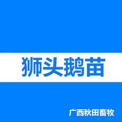 广西南宁狮头鹅苗