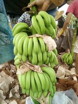 广东湛江巴西香蕉 40 - 50斤 七成熟