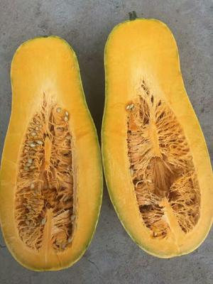 山东泰安蜜本南瓜 长条形 6~10斤
