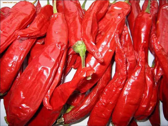 美国红辣椒 15~20cm 红色 微辣