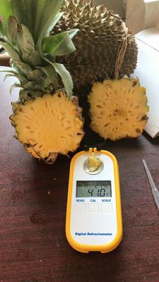 广西南宁泰国小菠萝 1.5 - 2斤