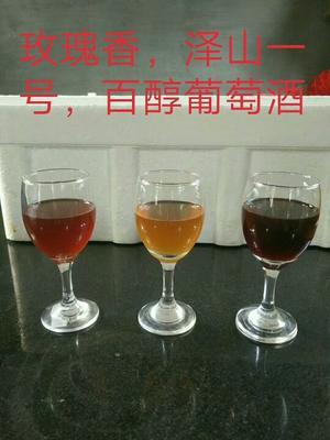 山东青岛葡萄酒 10-15度 1-3年