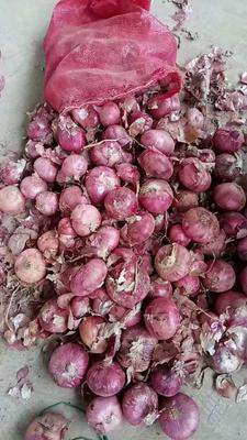 山东济宁红皮洋葱 8cm以上 4两以上 红皮