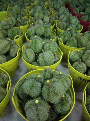 山东潍坊泰国榴莲 3 - 4公斤 80 - 90%以上