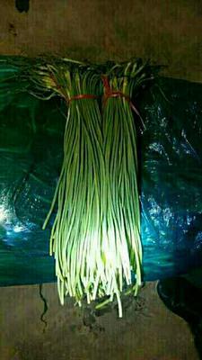 山东济宁金乡红帽蒜苔 一茬 50~60cm 精品
