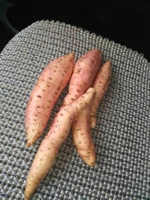 山东济宁烟薯25 3两以上 黄皮