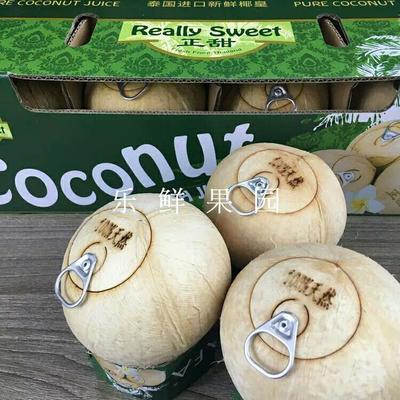 海南澄迈椰皇 1.5 - 2斤 易拉罐椰黄椰子