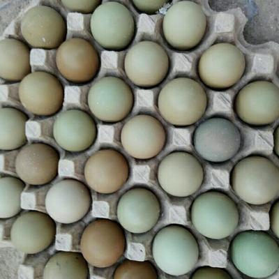 山东菏泽野鸡蛋 食用 箱装