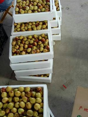 这是一张关于大荔冬枣 拐二 10-20g的产品图片