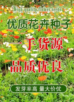 江苏省南京市江宁区美人蕉种子 2cm以下 0.5米以下