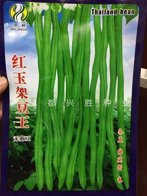 四川省成都市新都区四季豆种子 种子