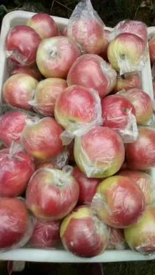 这是一张关于美八苹果 75 - 80mm 表光 膜袋的产品图片