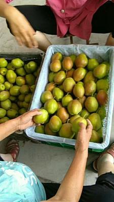 这是一张关于红香酥梨 150-200g 60mm以上的产品图片