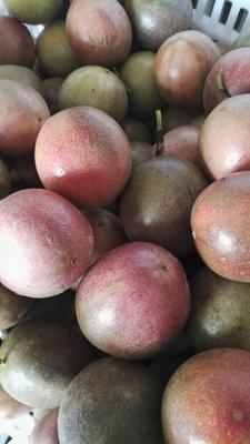 广西玉林紫色百香果 70 - 80克
