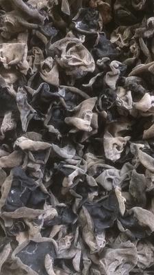 吉林省延边朝鲜族自治州敦化市敦化雁鸣湖小山干木耳 紫色