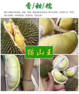 广西崇左猫山王榴莲 2 - 3公斤 60 - 70%以上