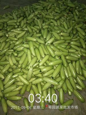 山东聊城绿玉西葫芦 0.6~0.8斤