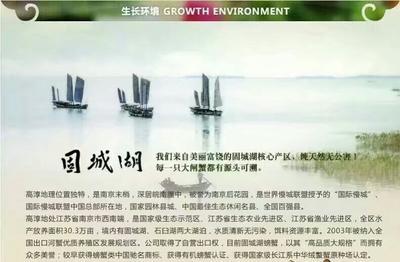江苏南京高淳区固城湖大闸蟹 母蟹 2.0-2.5两