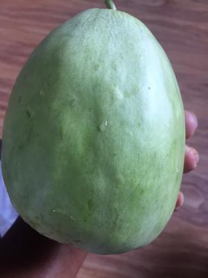 江苏宿迁脆宝甜瓜 0.5斤以上